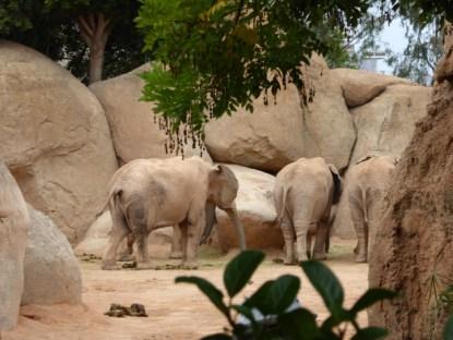 Biopark_Elefanten