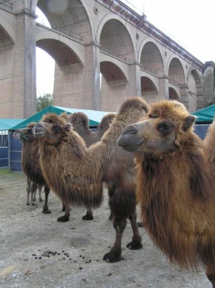 Besuch am Viadukt