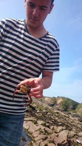 Crab with no pinsers.. poor thing!