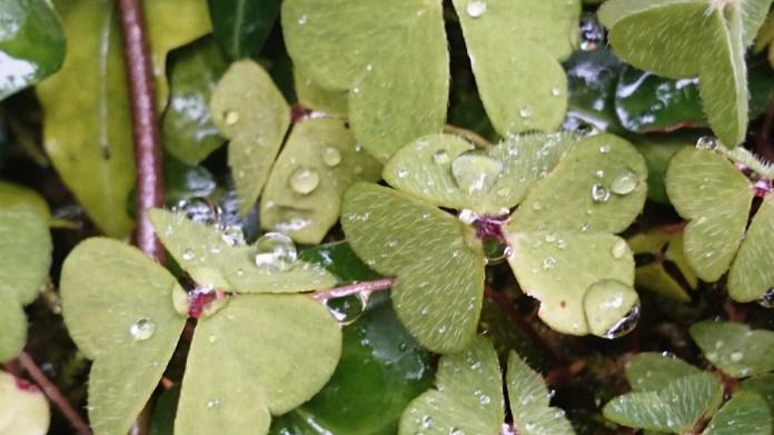 Pretty raindrops!
