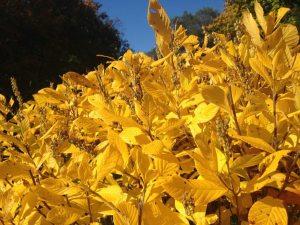 fall bush in the backyard