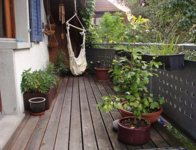 Auf diesem Balkongarten wächst einiges. Im Vordergrund steht ein Ginkgo Baum und an der Hausfassade wachsen allerlei Kräuter.