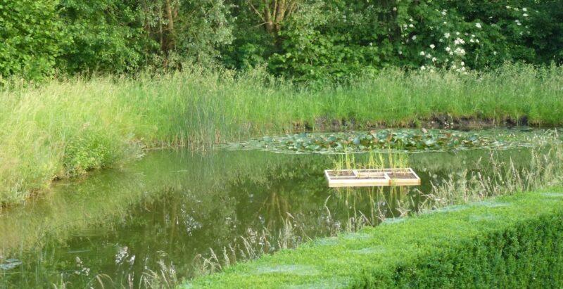 Wasser belebende Pflanzinsel auf dem Weiher vom Wasserschloss Wyher.
