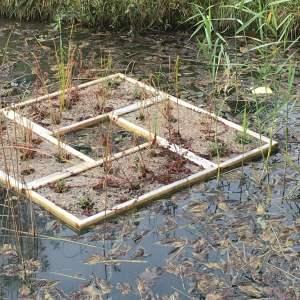 Pflanzinseln für sauberes Wasser