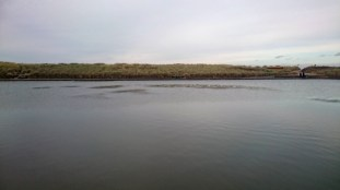 weedy lake 2