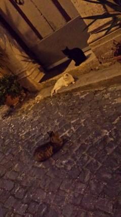 venafro-kitties