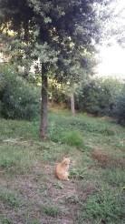 cat in pozzuoli
