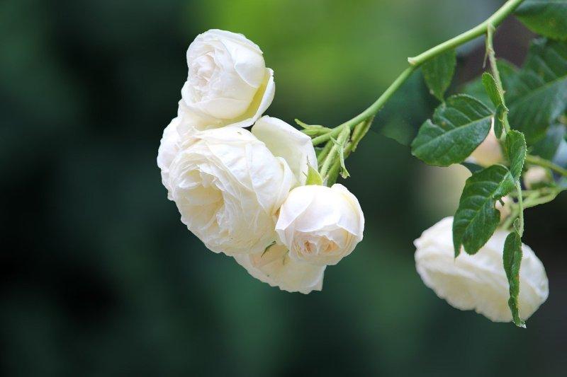 fleuriste deuil paris