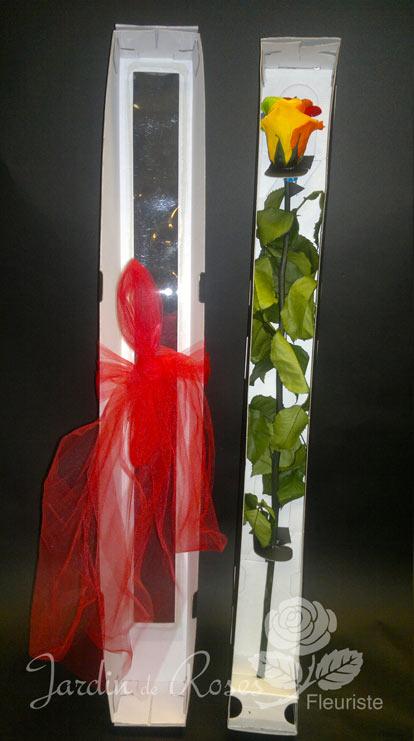Rose Ternelle Arc En Ciel Livraison De Fleurs St Hubert
