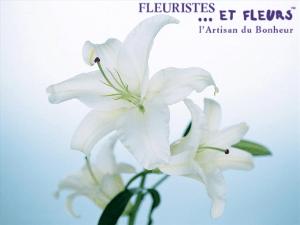 lis blanc fleuristes et fleurs artisan du bonheur