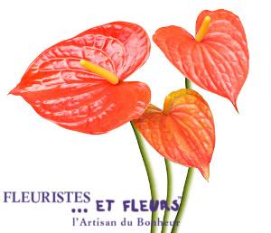 anthurium fleuristes et fleurs artisan du bonheur