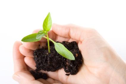 conseil entretien plante fleuristes et fleurs
