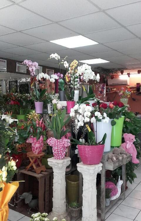 vend fond de fleurs serignan 34