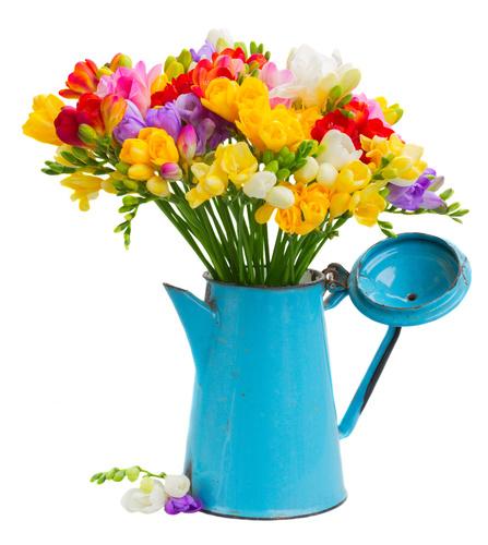 La fleur de freesia par fleuristes et fleurs for Fleuristes et fleurs