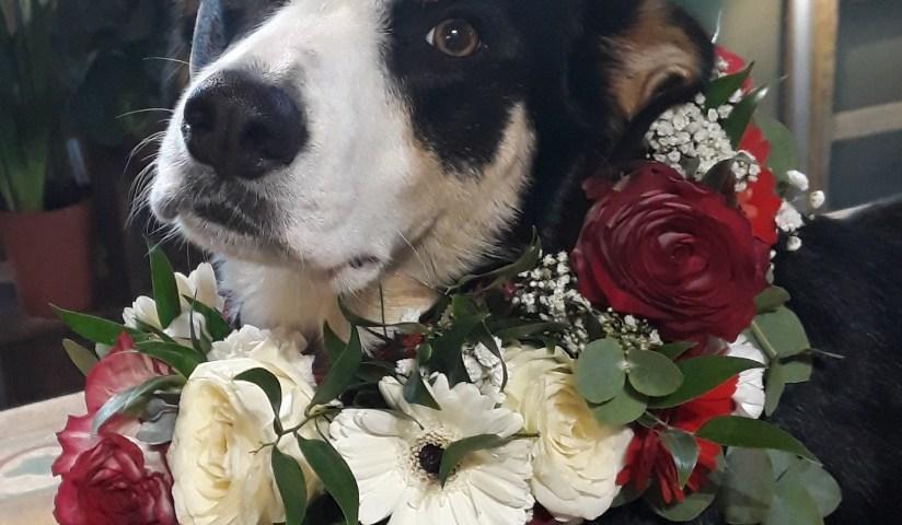 Envoyer des fleurs à Joyeuse avec votre fleuriste Vegetal