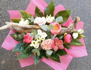 Hellébore Fleur de Pau