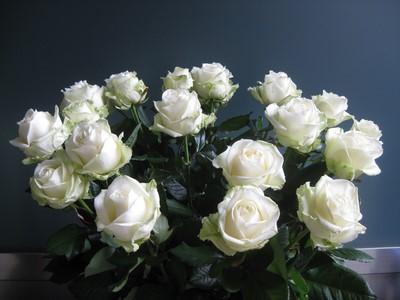 Nos Roses