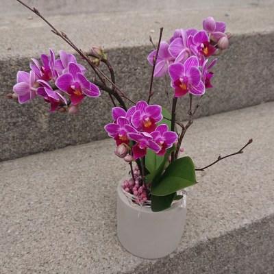 b.cornut fleuriste - petite orchidée dans son pot