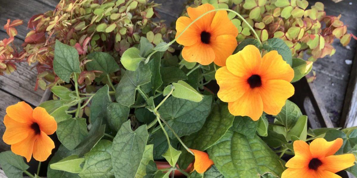 b.cornut fleuriste - c'est l'été