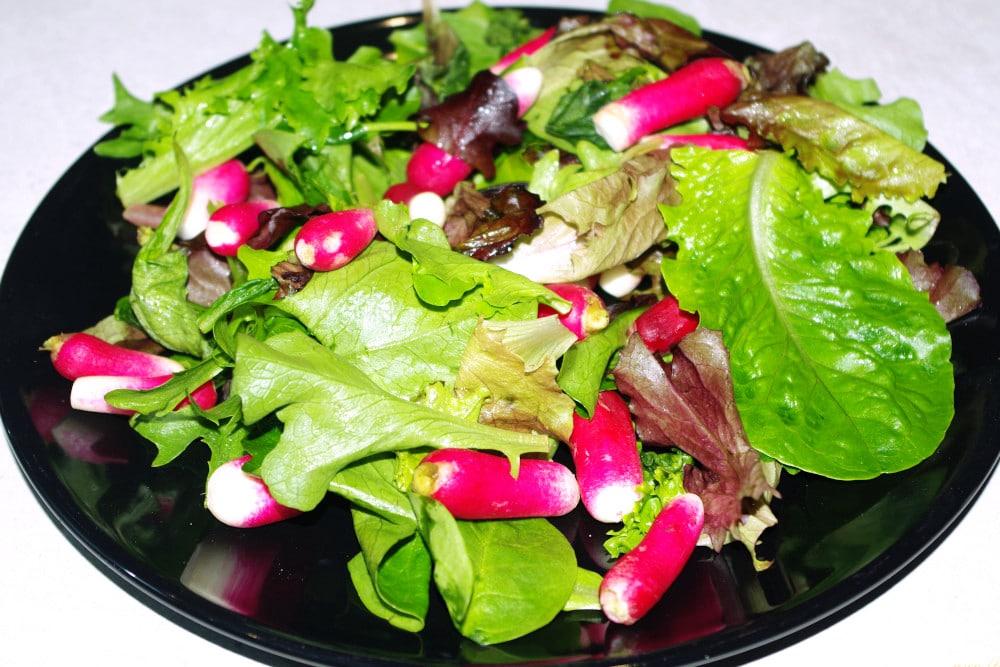 Recette de salade de jeunes pousses aux radis