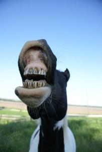 Maggio Laughing