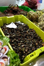 Local seafood delicacy - percebes, or goose foot barnacles