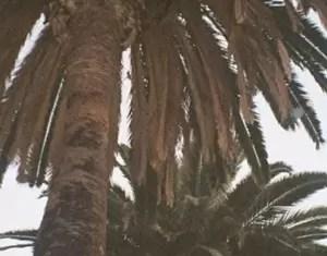 Akthesavior 2 Chains Freestyle Mp3 Download