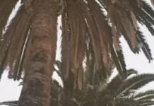 Eric Bellinger New Light Album Download Zip