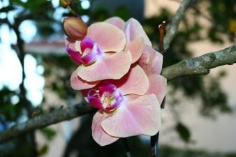 Orchid_shot