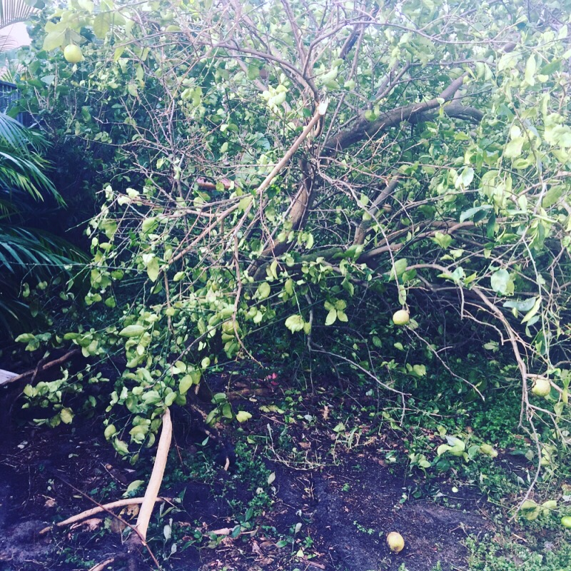 Irma's aftermath