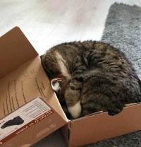 kitty-6