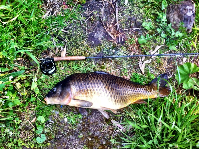 The Scott A4 four weight has easily accounted for numbers of very good carp :)
