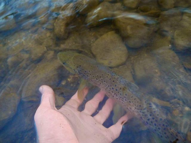 Releasing the long skinny stream fish.
