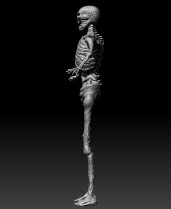 skeletonnocolor_side