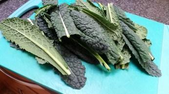 Kale grown in our garden.