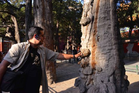 Abraham in awe of the giant cypress trees in the Imperial Garden