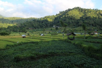 View of a near by Rice Terrace