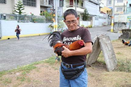 Rooster_Fighting_Philippines_03