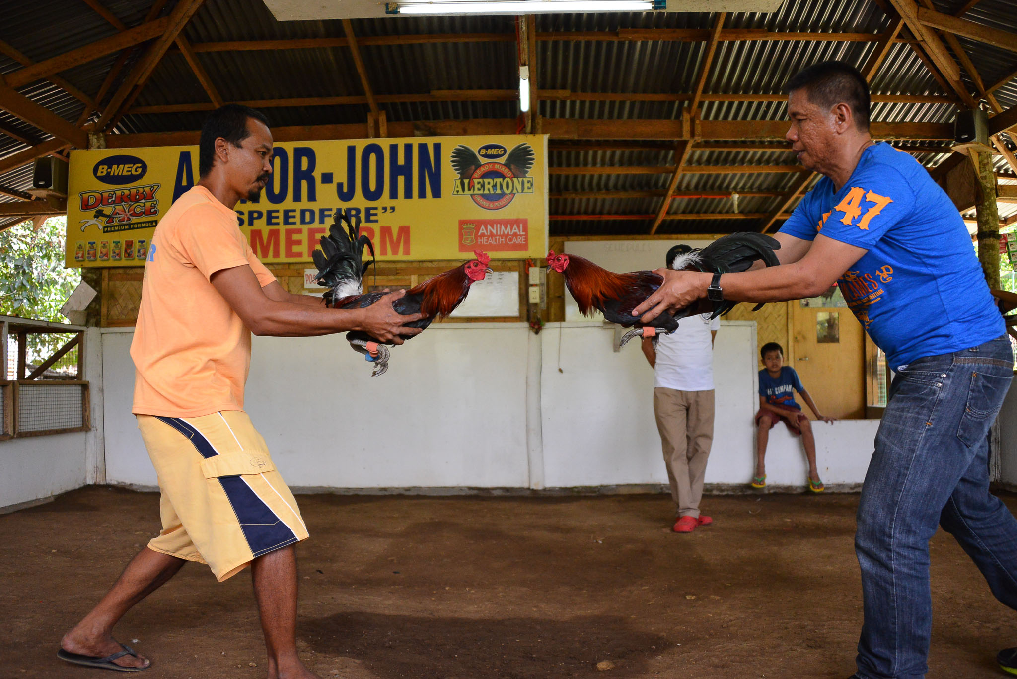 Rooster_Fighting_Philippines_14