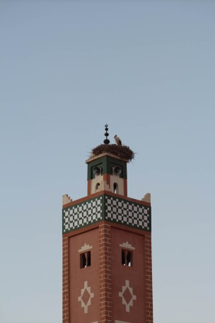 Stork nest top of Mosque