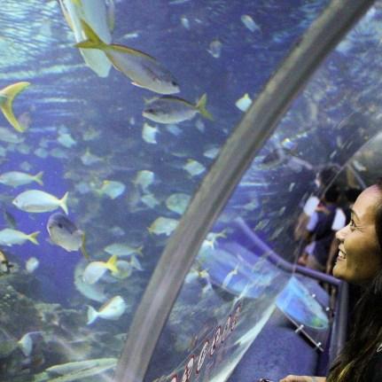 Celeste - Aquaria KLCC