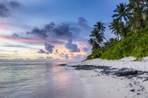 White sand beach in Hawaii with trees at sunset with blue sky