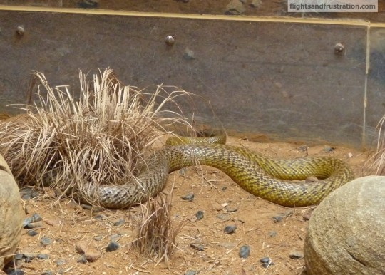 The Fierce Snake is the most venomous snake in the world