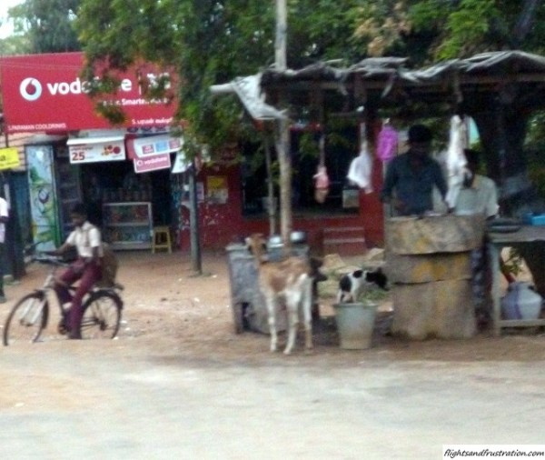 Stray dogs in India as part of a love hate relationship