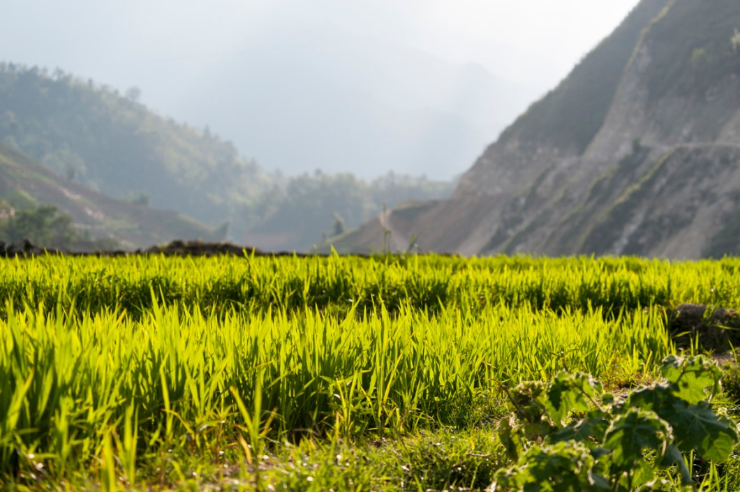 Sapa Rice and Mountains