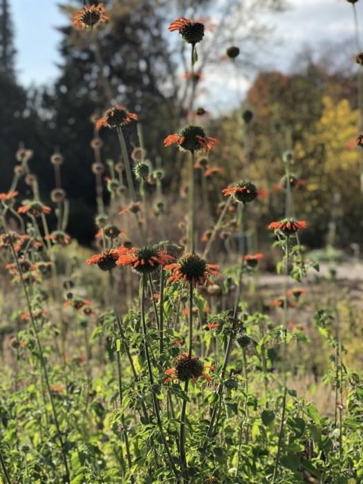 Botanischer Garten Dresden 5