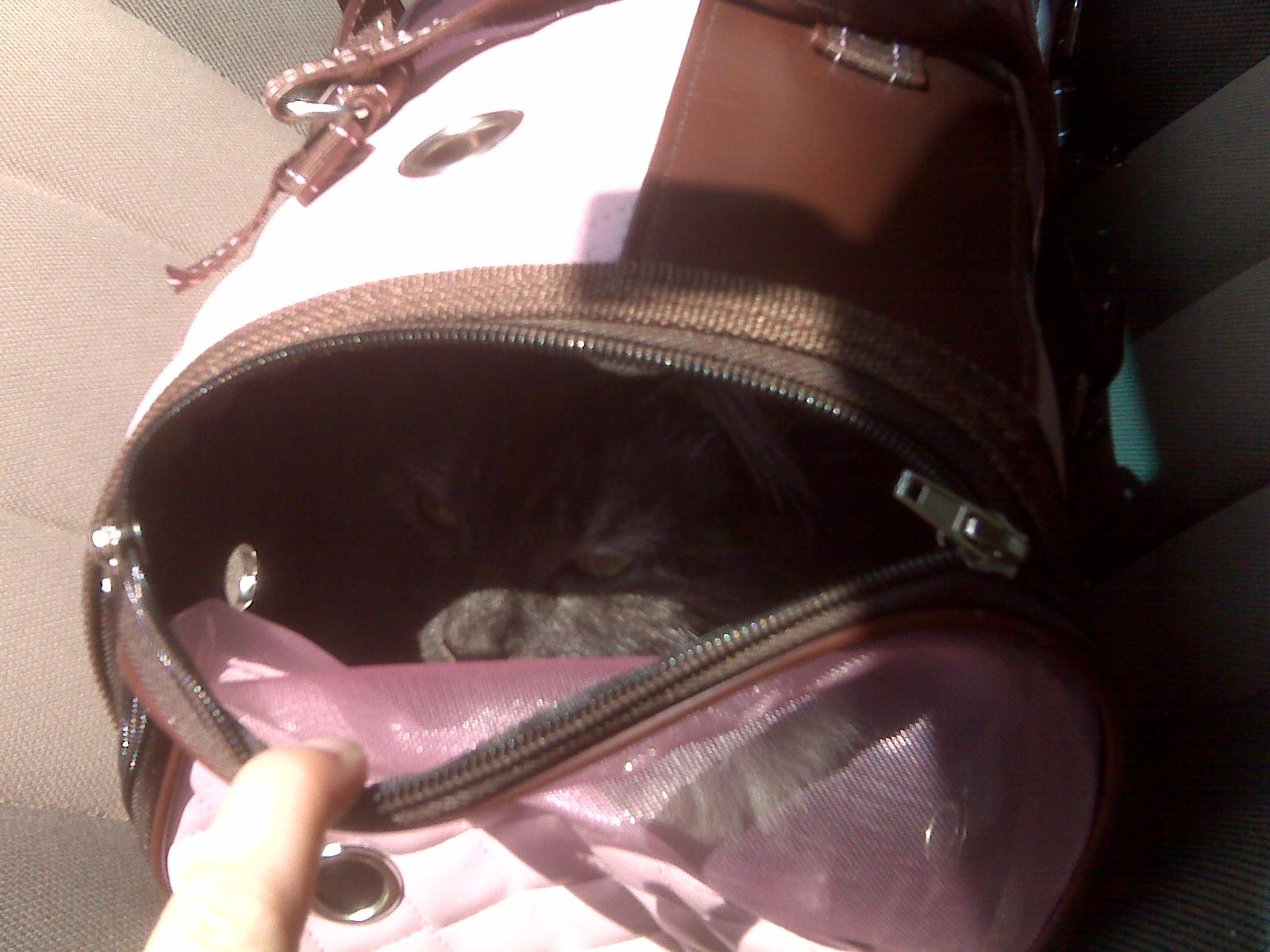she secretly loves the pink bag