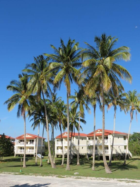 Palm trees & hotel rooms Maria La Gorda Cuba