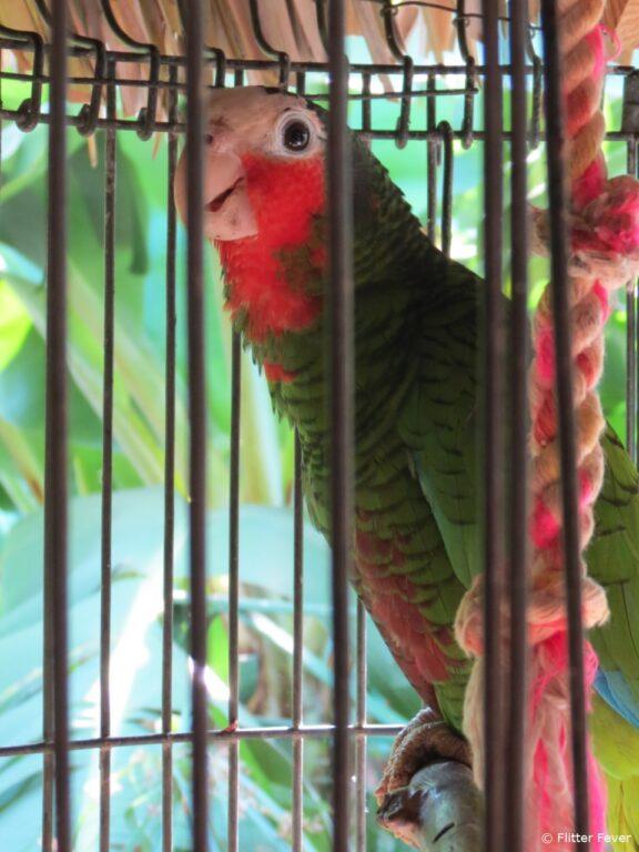 Parrot Casa Hostal Idael & Dania in Matanzas Cuba