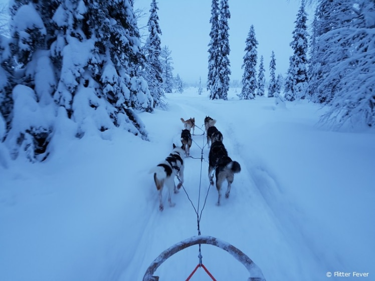 Rami's husky sleigh ride Finnish Lapland
